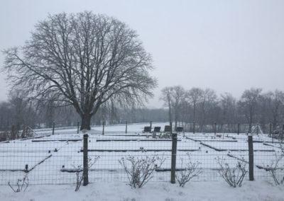 Marronnier en hiver